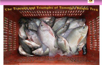 Tommy's Tilapia Trek