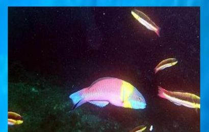 Fish Life in Manzanillo