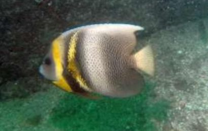 Fish Life of Manzanillo