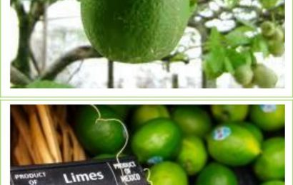 Precious Limes