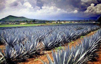 A visit to Santiago de Tequila