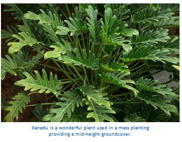 I planted roots in Mexico – Xanadu