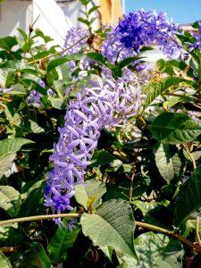 Purple wreath - Manzanillo Sun eMagazine